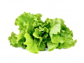 Green Lettuce plant 1200x960