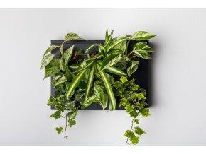 Obraz z živých rostlin HOH! UNO osázený, černá
