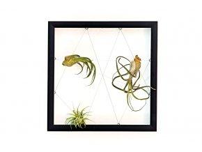"""Obraz z živých rostlin """"Jogín"""" 3 rostliny, 33x33cm, černá"""