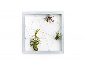 """Obraz z živých rostlin """"Jogín"""" 3 rostliny, 33x33cm, stříbrná"""