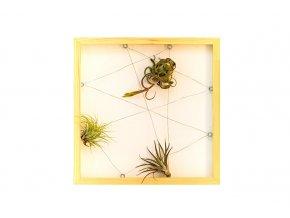 """Obraz z živých rostlin """"Jogín"""" 3 rostliny, 33x33cm, přírodní"""