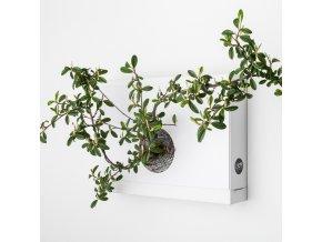 Obraz z živých rostlin Artkami centro neosázený, bílá