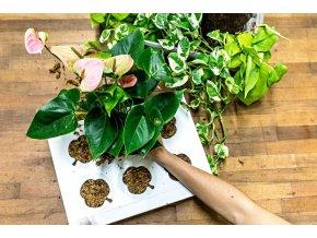 Workshop - Osázejte si svůj obraz z živých rostlin