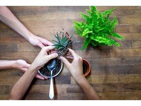 Workshop - Pro děti s rodiči - základ o rostlinách
