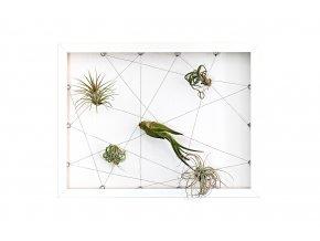 """Obraz z živých rostlin """"Jogín"""" 5 tillandsií, 30x40cm, bílá"""