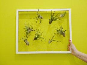 """Obraz z živých rostlin """"Jogín"""" 7 tillandsií, 30x40cm, bílá"""