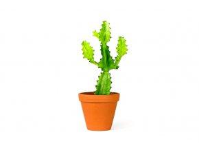 Gardners.cz Euphorbia candelabrum 2