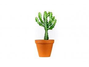 Euphorbia lactea, průměr 10 cm  Pryšec