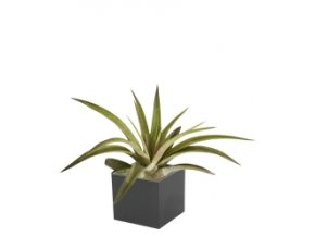 Set magnetického květináče CUBE 3,5cm s Tillandsia Capitata, černá