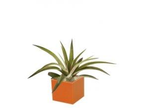Set magnetického květináče CUBE 3,5cm s Tillandsia Brachycaulos, oranžová