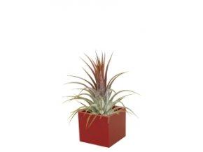 Set magnetického květináče CUBE 3,5cm s Tillandsia Ionantha, červená