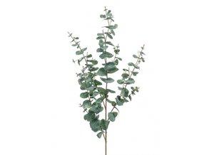Gardners.cz Eucalyptus gunnii
