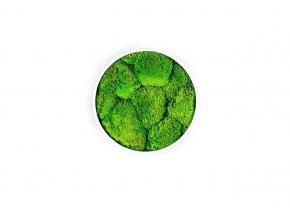 Gardners.cz mechovy obraz kulatá kopečkový mech (2)
