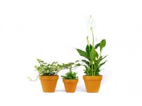 Gardners.cz Set rostlin do koupelny