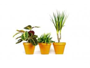Gardners.cz Set rostlin do ložnice