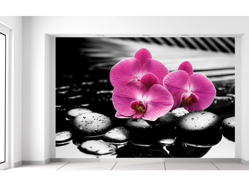 Fototapeta Krásná orchidej mezi kameny  + Dárek