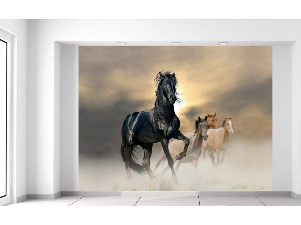 Fototapeta Nádherný černý kůň  + Dárek