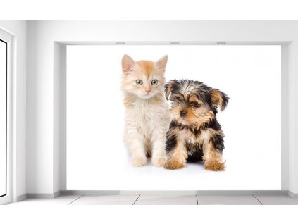 Fototapeta Roztomilý pejsek a kočička  Extra gramáž a tloušťka (180-212g/m2 a 100um)