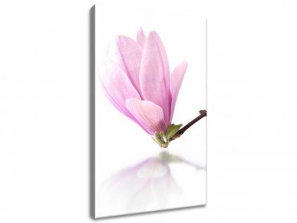 Obraz na plátně Větvička magnolie  Tištěný v HD