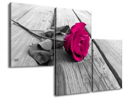 Obraz na plátně Rozkvetlá růže na molu 90x60cm  Tištěný v HD