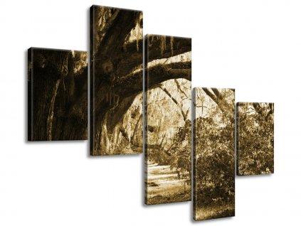 Obraz na plátně Cestička při dubech 100x75cm  + Dárek