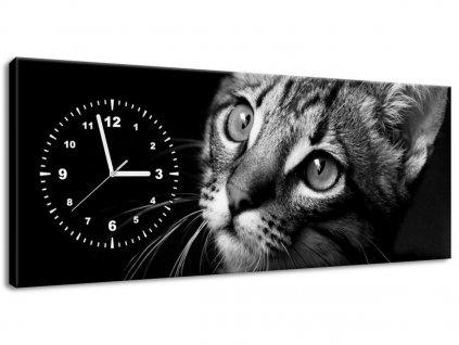 Obraz s hodinami Kočičí pohled - Visualpanic  + Dárek