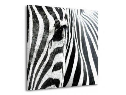 Obraz na plátně Oko zebry Attila_Toro 40x40cm  Tištěný v HD