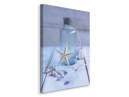Obraz na plátně Hvězdice při láhvi Shooter Howard 40x50cm  Tištěný v HD