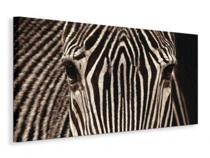 Obraz na plátně Pohled zebry Cano Marina 100x50cm  Tištěný v HD