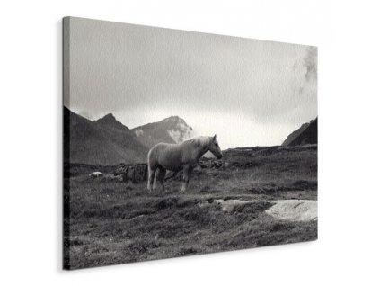 Obraz na plátně Kůň v horách Stridsberg Andreas 80x60cm  Tištěný v HD