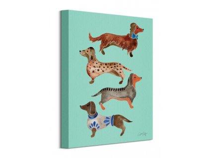 Obraz na plátně Čtyři psíci jezevčíci Coquillette Cat 30x40cm  Tištěný v HD