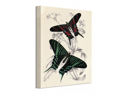 Obraz na plátně Zajímavé motýli Piddix 30x40cm  + Dárek