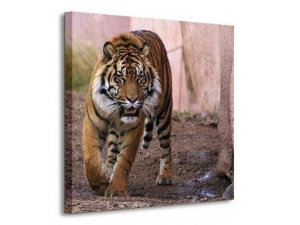 19915 vaszonkep alfa tigris altma 40x40cm