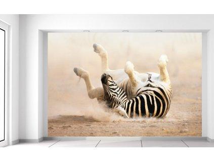 Fotótapéta Boldog zebra 200x135cm  + Ajándék