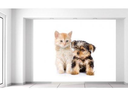 Fotótapéta Bűbájos kiskutya és cica  + Ajándék