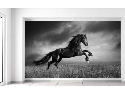 Fotótapéta Titokzatos fekete ló  + Ajándék