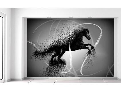 Fotótapéta Fekete-fehér ló - Jakub Banas  + Ajándék