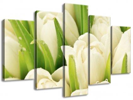 Vászonkép Gyengéd tulipánok  + Ajándék