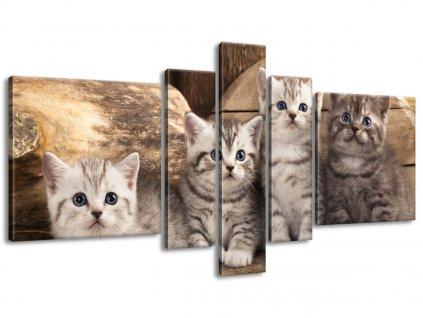 Vászonkép Brit macskák 160x80cm  + Ajándék