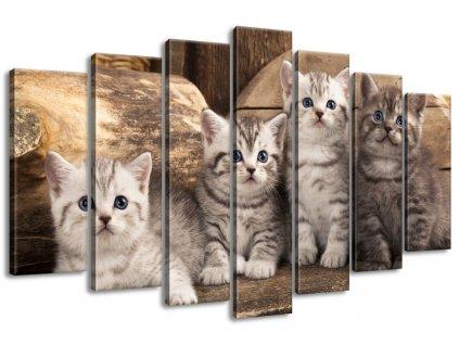 Vászonkép Brit macskák 140x80cm  + Ajándék