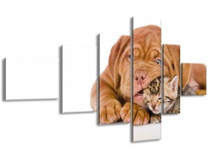 Vászonkép Mint a kutya és a macska 180x100cm  + Ajándék