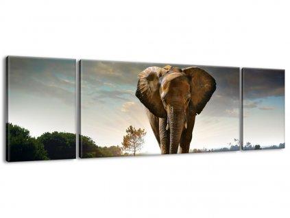 Vászonkép Magányos erős elefánt 170x50cm  + Ajándék