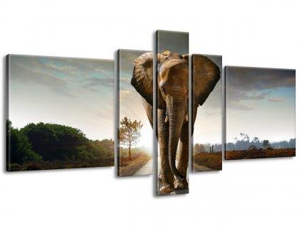 Vászonkép Magányos erős elefánt 160x80cm  + Ajándék