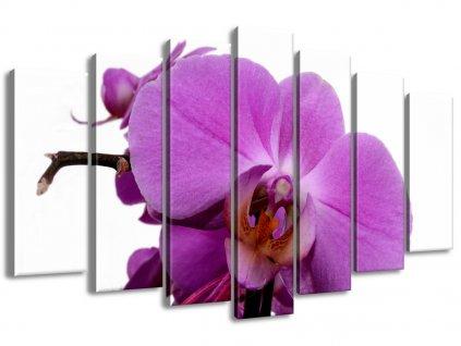 Vászonkép Lila orchidea a fehéren 140x80cm  + Ajándék
