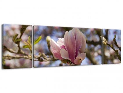 Vászonkép Virágzó magnóliák 170x50cm  + Ajándék