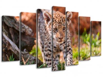 Vászonkép Mayra - Tambako The Jaguar 140x80cm  HD nyomtatás