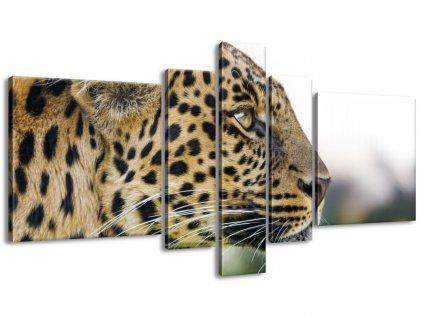 Vászonkép Leopard - Tambako The Jaguar 160x80cm  HD nyomtatás