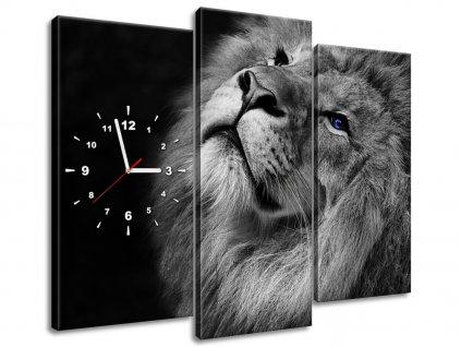 Órás falikép Kékszemű oroszlán 90x70cm  + Ajándék