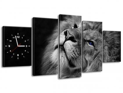 Órás falikép Kékszemű oroszlán 150x70cm  + Ajándék