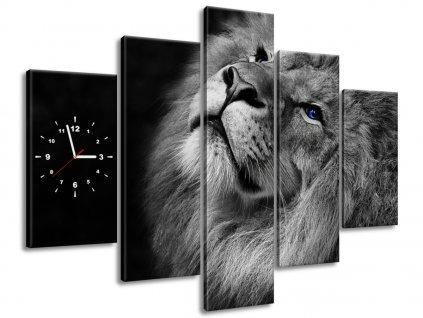 Órás falikép Kékszemű oroszlán 150x105cm  + Ajándék